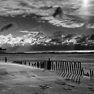 Beach and erosion fence at Cape May, N.J. by DaveHrusecky