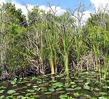 Lilly Pads Everglades National Park, Florida by T-ShirtsGifts