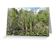 Lilly Pads Everglades National Park, Florida Greeting Card