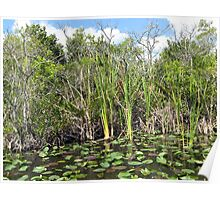 Lilly Pads Everglades National Park, Florida Poster