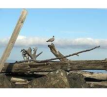 Port Angeles Harbor, Washington Photographic Print