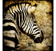 Zebra Texture on Texture Photographic Print