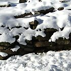 Old Stone Wall by Iva Penner