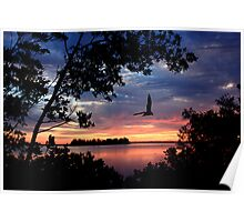 INDIAN RIVER SUNRISE WITH GULL Poster
