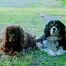 Rowley and Rupert  by BronReid