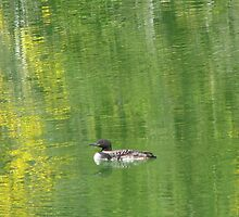Peaceful loon  by lonerider