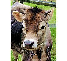 Calf Closeup Photographic Print