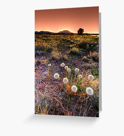 Dandelions Up Front Greeting Card