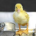 I&#x27;m Just Ducky! by Lori Deiter