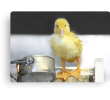 I'm Just Ducky! Canvas Print