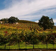 Autumn Afternoon in California Wine Country  by N2Digital
