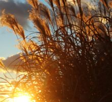 Sunset in the Ornamental Grass Sticker