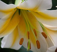 Flora Fascinator by Ricky Pfeiffer