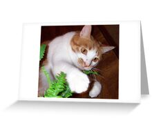 Molly Playing With A Silk Fern Greeting Card