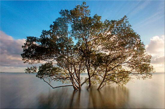 Mangrove at Sunrise by Kym Howard