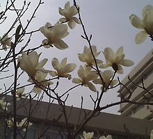 crystal flowers blossom a conner in campus by shuosi ren