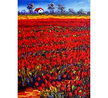 Home in the Red Fields Photographic Print