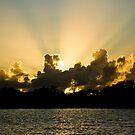 mangrove unrise by Alex Evans