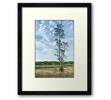 Carine wetlands Framed Print