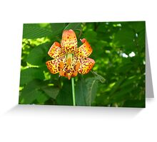 Orange Dragon Flower Greeting Card