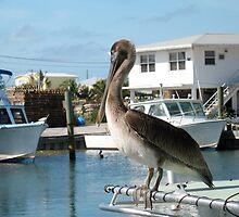 Pelican, Key Largo, Florida by Robert Stephens