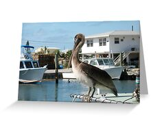 Pelican, Key Largo, Florida Greeting Card
