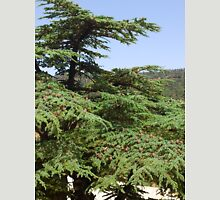 a wonderful Algeria landscape Unisex T-Shirt