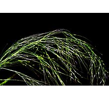 Grass seeds in the wind Photographic Print