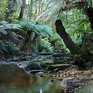 Hidden Gem - The Australian Bush by Jason Kiely