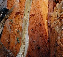 Standley Chasm by Cheryl Parkes