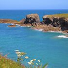 Summer Has Arrived In Cornwall by Rumyana Whitcher