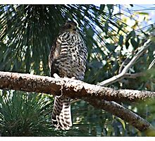 What Bird of Prey am I ?? Photographic Print