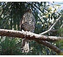 What Bird of Prey am I ?? Photographic Print