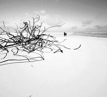Castaways and Driftwood by Karen Willshaw