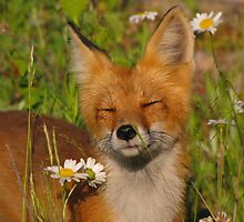 Take Time to Smell the Daisies by Lee-Anne Carver