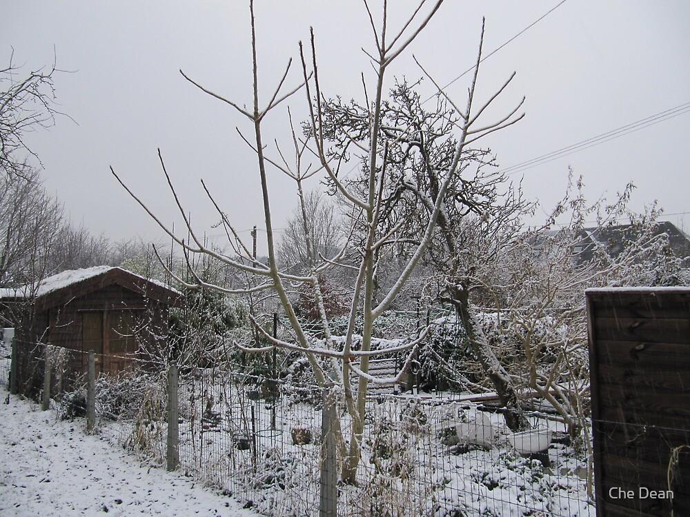 Cork Snow by Che Dean