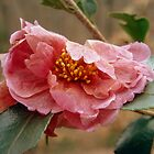 Camellia and ant by Meredith Wickham