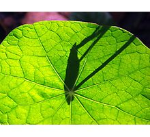 Nasturtium leaf sundial:  time flies Photographic Print