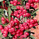 Red Berries by Sviatlana