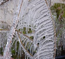 Florida Icicles - January 9th, 2010 by rd Erickson
