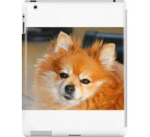 Pomeranian iPad Case/Skin