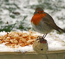 Robin, a guest in our garden by Adri  Padmos