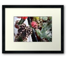 The cactus said it was a bee Framed Print