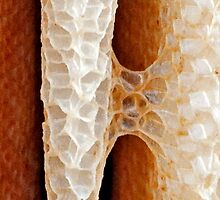 Honey Comb in Nature by Michael Kuropatkin
