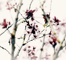 bloom~ by Brandi Burdick