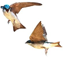 Flying Tree Swallows by arcadian7