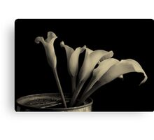 Canned Callas Canvas Print