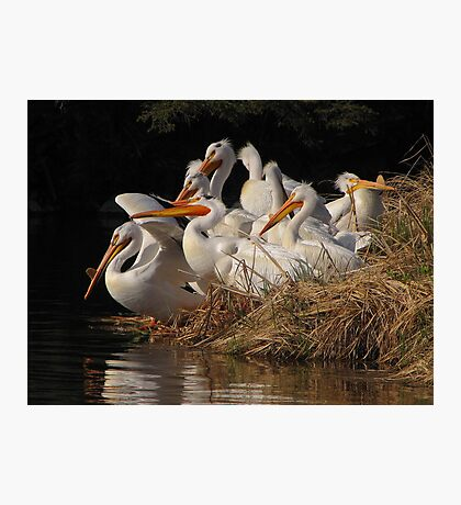 A Squadron of Pelicans Photographic Print