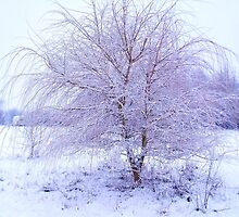 The Snow Tree by charlylou