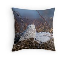 Snowy Owl on Hill Top - Amherst Island, Ontario Throw Pillow